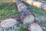 В Братском районе «накрыли» банду «черных» лесорубов