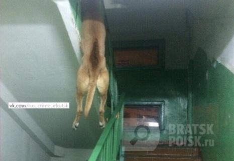 Жестокое убийство собаки в Иркутской области всколыхнуло общественность