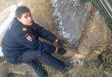 Полицейские Братска спасли, забредшую в город косулю (ВИДЕО)