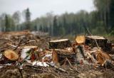 В Братске осудили «черных лесорубов» и заставили вернуть 5,8 млн рублей