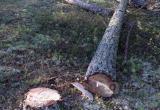 Братским лесорубам грозит до 7 лет тюрьмы