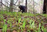 В Братске потерялась пенсионерка, которая уехала в лес за черемшой