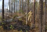 В Иркутской области сократилось количество лесных пожаров