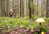 В Братске женщина ушла за грибами и не вернулась