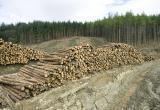 Иркутянин записал песню о вырубках лесов в регионе