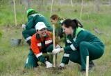 Работники лесной отрасли отмечают профессиональный праздник